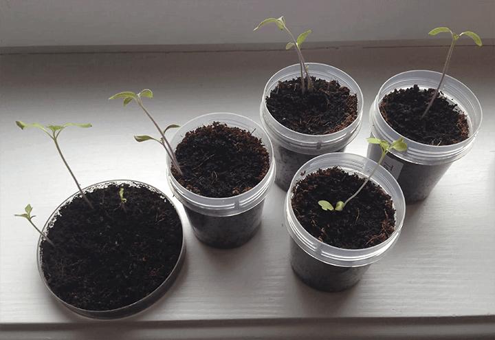 Что выросло из семян на AliExpress